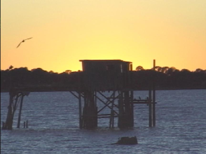Crystal River Citrus County Fishing Tours Rentals Repairs Activities
